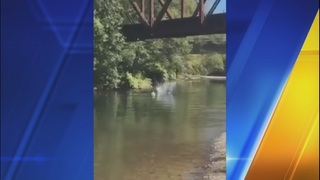 4-year-old boy survives being tossed 25 feet from bridge into river