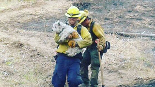 Firefighters save lost dog from wildfire near Leavenworth