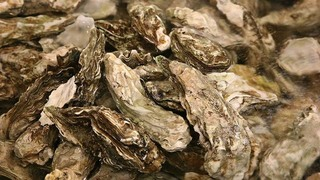 Taylor Shellfish sued for racial harassment