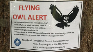 Flying owl warnings posted at parks after attacks
