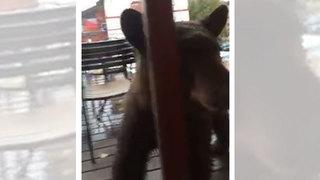 VIDEO: Young bear sniffs around Leavenworth burger restaurant