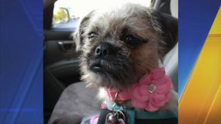 Pregnant woman carjacked, dog stolen