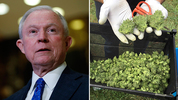 United States Attorney General nominee Jeff Sessions and legal marijuana in Oregon. (AP photos)