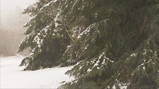 Real-time updates: Snow falls over Western Washington