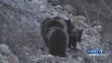 Darrington community to meet and discuss North Cascades grizzly bear plan