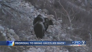 Darrington residents bearing down on federal plan to bring back grizzly bears