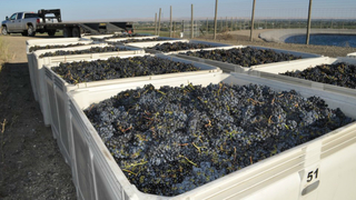 Wash. winemaker, donating to vineyard workers without health insurance,…