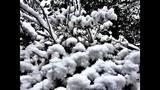 PHOTOS: Late Feb. snow falls around the Sound - (10/73)