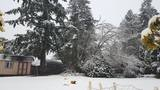 PHOTOS: Late Feb. snow falls around the Sound - (51/73)
