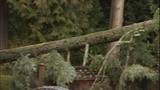 PHOTOS: Trees fall amid high winds - (12/14)