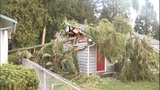 PHOTOS: Trees fall amid high winds - (3/14)