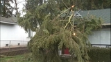 PHOTOS: Trees fall amid high winds - (7/14)