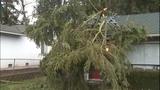PHOTOS: Trees fall amid high winds - (7/14)