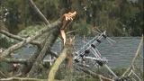PHOTOS: Trees fall amid high winds - (5/14)