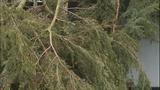 PHOTOS: Trees fall amid high winds - (11/14)
