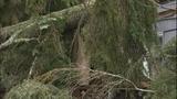 PHOTOS: Trees fall amid high winds - (10/14)