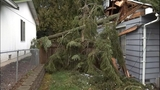 PHOTOS: Trees fall amid high winds - (2/14)