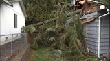 PHOTOS: Trees fall amid high winds - (2/14)