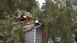 PHOTOS: Trees fall amid high winds - (1/14)