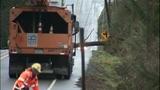 PHOTOS: Trees fall amid high winds - (14/14)
