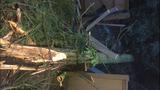 PHOTOS: Trees fall amid high winds - (6/14)