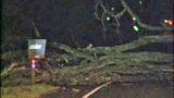 PHOTOS: Trees fall amid high winds - (9/14)