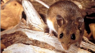 1 dies, 1 recovers from hantavirus in King County