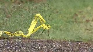Man dead after officers use stun gun