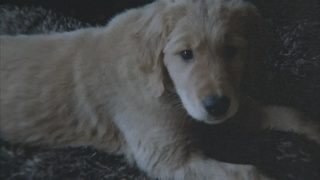 Lynnwood police locate stolen puppy, reunite it with its owner