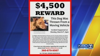Dog thrown from moving vehicle, dies in Oak Harbor
