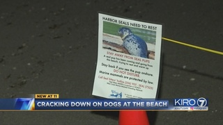 Crackdown on canines at Seattle beaches aims to protect seal pups