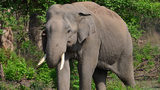 Washington state man pleads guilty to trafficking ivory