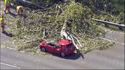 A tree uprooted and fell onto a vehicle on Interstate 5 in Fife on April 26. Chopper 7 flew over the 5-mile long backup, where a Prius was flattened by the tree. The driver of the Prius was knocked out, but she has since regained consciousness.