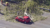 VIDEO: Tree falls on moving vehicle in Fife