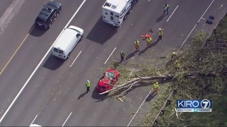 Fellow drivers recalled tree falling on I-5, how they helped save woman