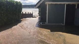 Beaver dam ruptures, floods roadway in Western Washington