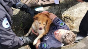 Bothell Fire, Bothell Public Works and Snohomish County Animal Control worked together to save a dog Friday. The dog was hit by a vehicle, and crawled into a storm drain. She is expected to recover.