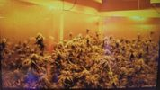 A grow room at one of the locations (Credit: Seattle Police Department)
