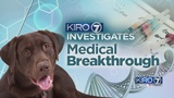 VIDEO: Revolutionary treatment in dogs to be tested in children