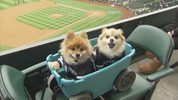 "Mariners fans brought their furry friends to Safeco Field Thursday for ""Bark at the Park"" night."