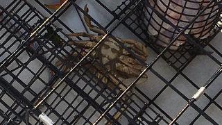 Park ranger: Crab flips over, shows face of Jesus