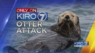 Dog attacked by otters in Lakewood, homeowners say