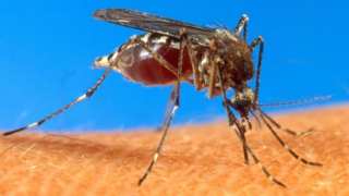 West Nile virus resurfaces in Pierce County after three years, via a…