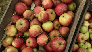 Washington apple farmers may see higher returns this season