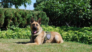 Washington K-9 officer finds escaped inmate who buried himself in sand