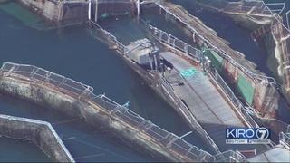 Fish farm with 300,000 Atlantic salmon collapses in San Juan Islands