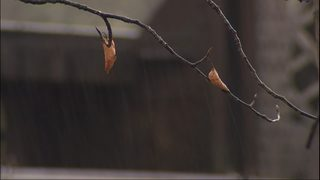 Western Washington rivers expected to rise