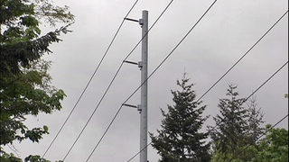 Wind advisory in effect for east Puget Sound lowlands