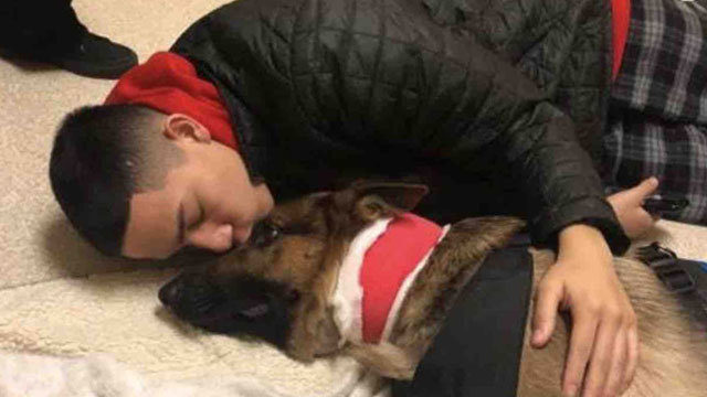 Hero dog takes bullet for teenager in des moines home invasion kiro tv solutioingenieria Image collections