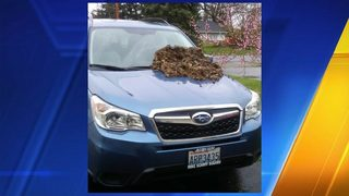 Dog poop dumped on car: $500 reward offered for info